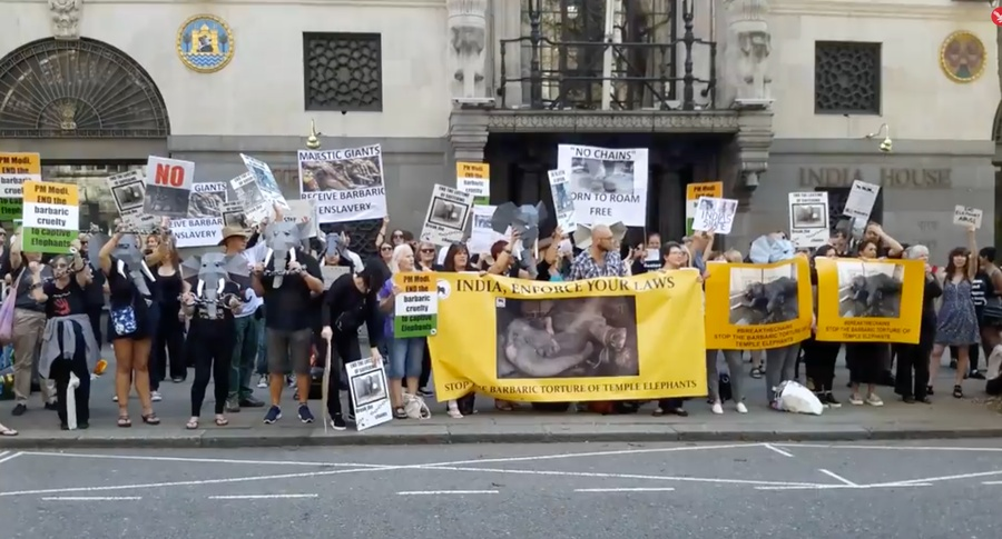 ACTION FOR ELEPHANTS UK